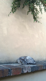 A cat napping on a ledge near Near St. Wenceslas vineyard, Prague, Czech Republic.