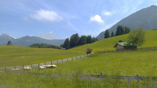 Sheep in a grassy field with mountains and sky, Germany.