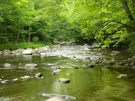 A rocky stream in The Great Smoky Mountain National Park.