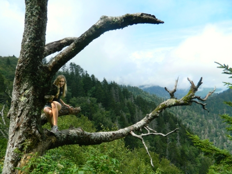 Climbing trees on the Appalachian Trail on the way to Charlies Bunion in the Great Smoky Mountains National Park.