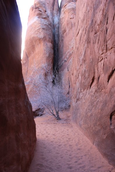 Hike to Sand Dune Arch.