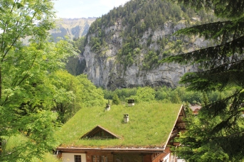 A grass covered rooftop in Lauterbrunnen.