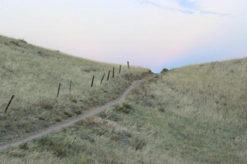 grass-path-fence-dusk